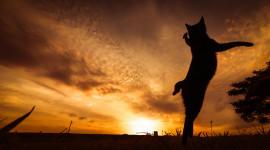 Sunset Cat Wallpaper