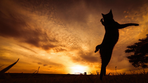 Sunset Cat wallpapers high quality