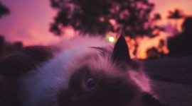 Sunset Cat Wallpaper For Android