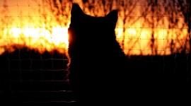 Sunset Cat Wallpaper For Desktop