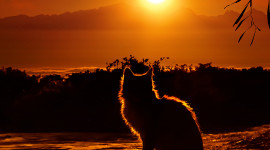 Sunset Cat Wallpaper For IPhone