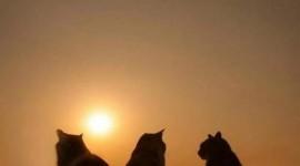 Sunset Cat Wallpaper For Mobile