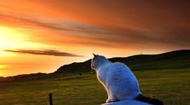 Sunset Cat Wallpaper For PC