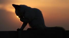 Sunset Cat Wallpaper Free