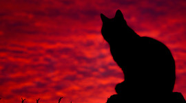 Sunset Cat Wallpaper Gallery