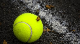 Tennis Ball Wallpaper Background