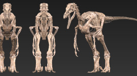 Velociraptor Best Wallpaper