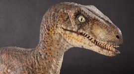 Velociraptor Desktop Wallpaper