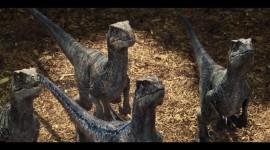 Velociraptor Desktop Wallpaper For PC