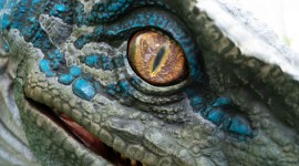 Velociraptor Wallpaper 1080p