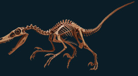 Velociraptor Wallpaper Background