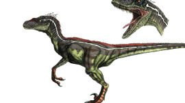 Velociraptor Wallpaper Download