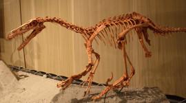 Velociraptor Wallpaper For PC