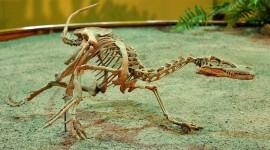 Velociraptor Wallpaper HQ