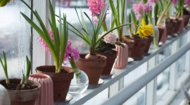 4K Flower Pot Photo Download