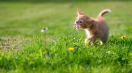 4K Kitten Grass Aircraft Picture