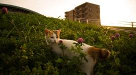 4K Kitten Grass Desktop Wallpaper