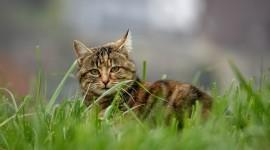 4K Kitten Grass Image Download