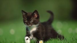 4K Kitten Grass Photo