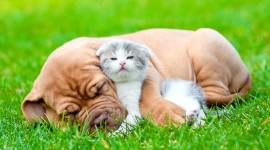 4K Kitten Grass Photo Download