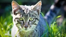 4K Kitten Grass Photo Free