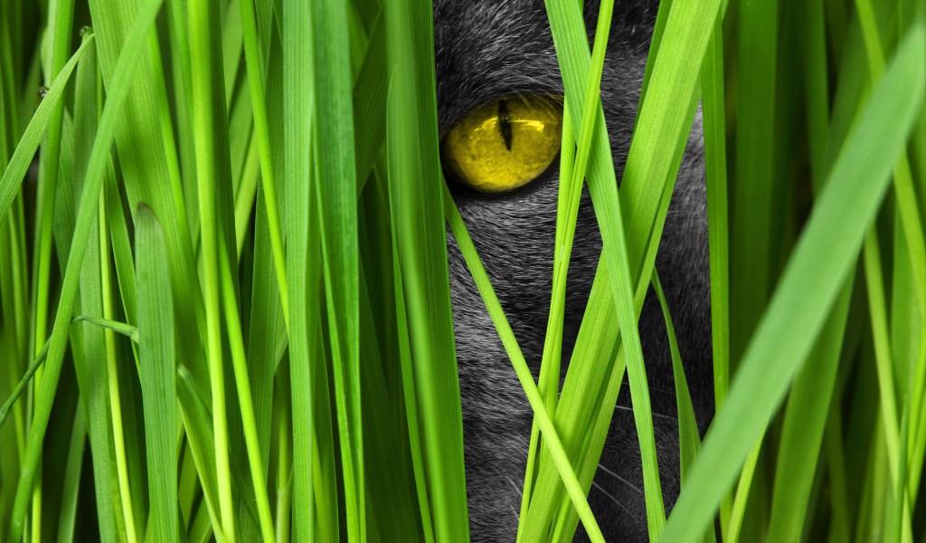 4K Kitten Grass wallpapers HD
