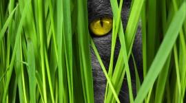 4K Kitten Grass Wallpaper