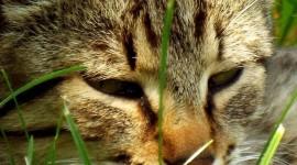 4K Kitten Grass Wallpaper For IPhone