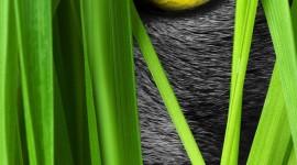 4K Kitten Grass Wallpaper For Mobile