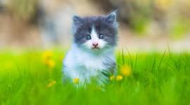 4K Kitten Grass Wallpaper For PC