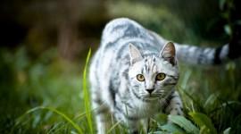 4K Kitten Grass Wallpaper Free