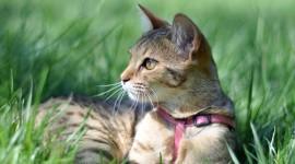 4K Kitten Grass Wallpaper Full HD