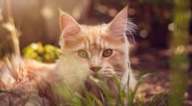 4K Kitten Grass Wallpaper HQ