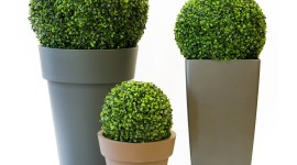 Boxwood Desktop Wallpaper HD