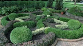 Boxwood Photo