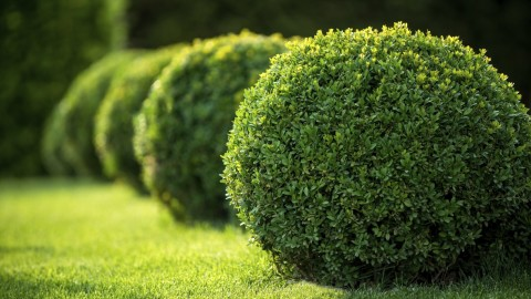 Boxwood wallpapers high quality