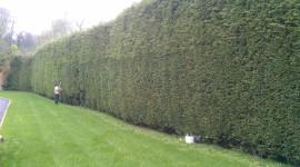 Bush Cutting High Quality Wallpaper