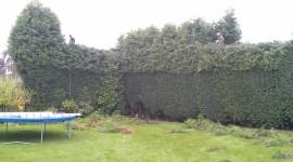 Bush Cutting Wallpaper Free