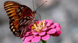 Butterfly Nectar Aircraft Picture