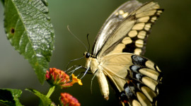 Butterfly Nectar Image