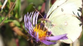 Butterfly Nectar Photo Download
