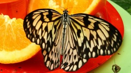 Butterfly Nectar Photo Free