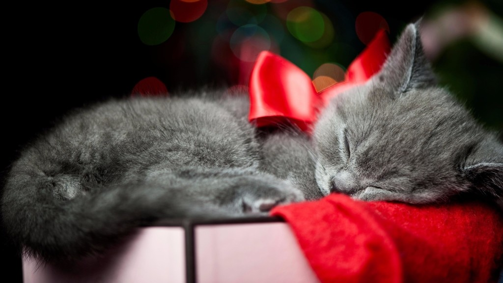 Cat With A Bow wallpapers HD
