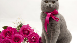 Cat With A Bow Image