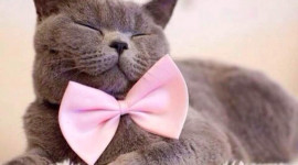 Cat With A Bow Image Download