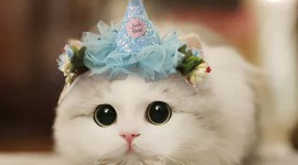Cat With A Bow Photo