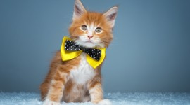Cat With A Bow Photo Download