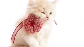 Cat With A Bow Photo Free