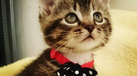Cat With A Bow Wallpaper Gallery