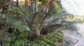Cycads Aircraft Picture